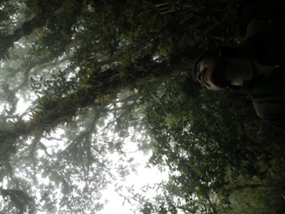 Within the Cloudforest