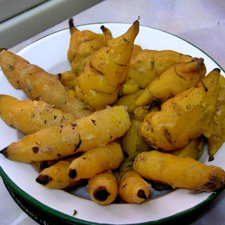 Cooked Yellow Oca
