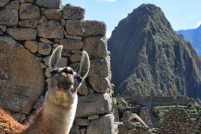 Hola! Welcome to Machu Picchu! - June 2012 Peru Photo Contest