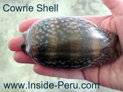 Except this cowry that Lin found